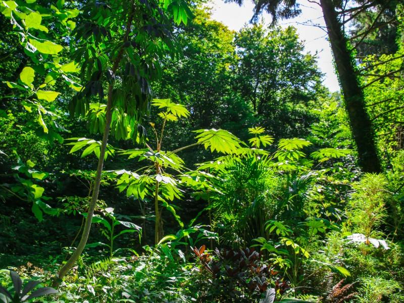 Le Jardin jungle karlostachys (20 km)